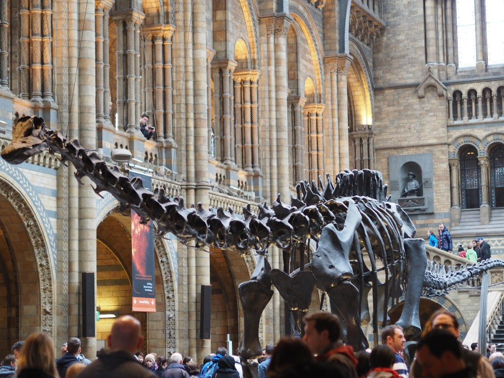 Natural History Museum - Dippy